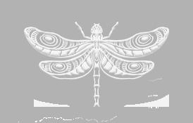 smile-again-dental-logo-dragonfly